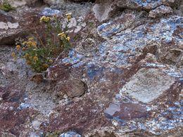 Hyrothermal gebildeter Opal aus Akrotiri (c) Tobias Schorr